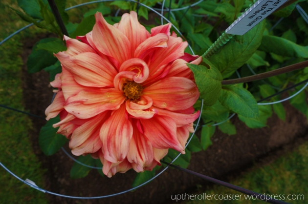 Halifax Public Gardens - Flowers | Up the Rollercoaster